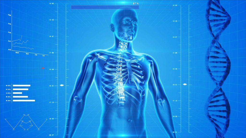 Squelette humain pour illustrer le mal de dos